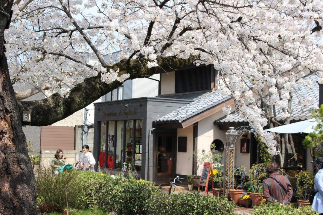 3キロメートルつづく桜の並木道